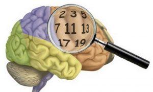 Matemático explica, como o cérebro, desenvolve habilidades, cognitivas com números, Matemático, explica como, o cérebro desenvolve, Habilidades, Cognitivas, Números,  Cérebro, Desenvolve, Matemático, Pedagogo,  Psicopedagogo, na Plasticidade,  Cerebral,  Cultura,  Hábito,  Aprender,  Leitura, Escrita, Córtex parietal,  Esforço cognitivo,   Netos,      A Matemática, Assunto, Células, Corpo, Corpo Humano, Cotidiana, Humano, Leitor, Metemático, Notícias, Pedagogo, Presente, Psicopedagogo, Tema, Trends, Tronco, Uol, Valdivino Sousa, Vida, XYZ,      TAGS  Matemático, Cérebro, Desenvolve, Habilidades, Cognitivas, Números, Trends, XYZ, Uol, artigos, Notícias, Pedagogo, Psicopedagogo, Cerebral, Cultura, Hábito, Aprender, Córtex, Esforço,